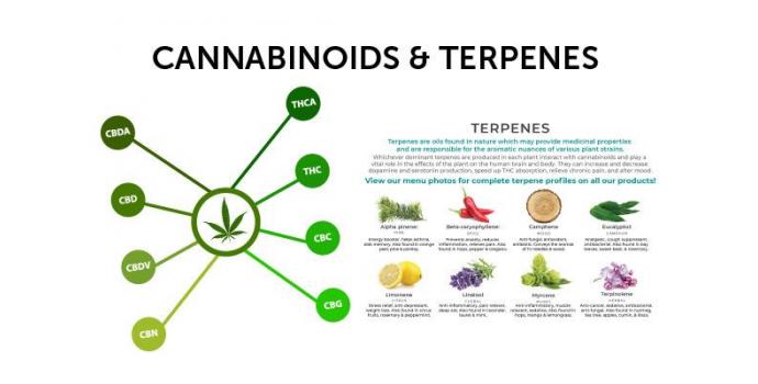 Terpeenid Ja Kannabinoidid – Milline On Nende Koosmõju?